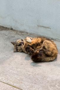 横たわる猫の写真素材 [FYI02669837]
