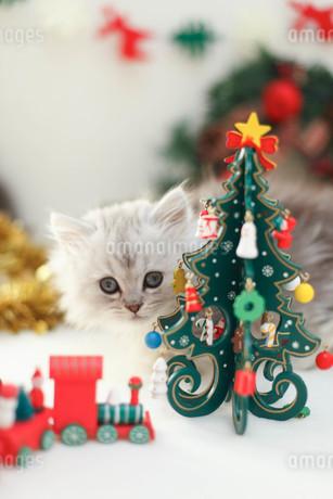 クリスマスと子ねこの写真素材 [FYI02669843]