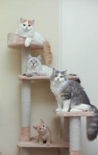 4匹の猫の写真素材 [FYI02669972]