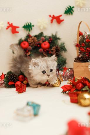 クリスマスと子ねこの写真素材 [FYI02670098]