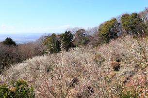 筑波山梅林の写真素材 [FYI02670127]