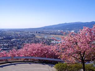 桜道路と小田原市遠景の写真素材 [FYI02670138]