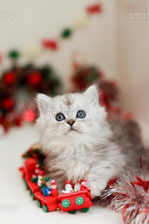 クリスマスと子ねこの写真素材 [FYI02670154]