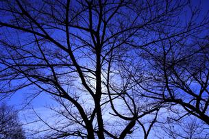 木のシルエットの写真素材 [FYI02670224]