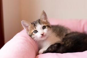 かわいい仔猫の写真素材 [FYI02670238]