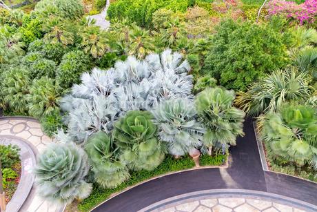 ガーデンズバイザベイの植物の写真素材 [FYI02670250]