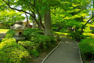 大田黒公園の写真素材 [FYI02670290]