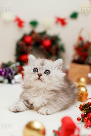クリスマスと子ねこの写真素材 [FYI02670366]