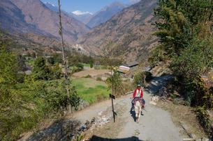 ネパール ゴレパニ・トレッキングコースの写真素材 [FYI02670381]
