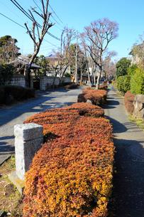大宮盆栽村かえで通りの写真素材 [FYI02670390]