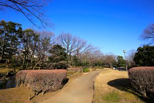 国会前庭和式庭園の写真素材 [FYI02670463]