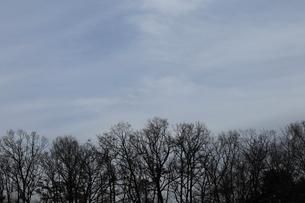 雑木林のシルエットの写真素材 [FYI02670467]