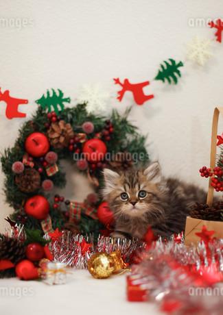 クリスマスと子ねこの写真素材 [FYI02670605]