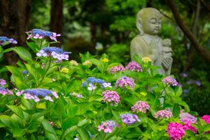北浦の紫陽花寺の写真素材 [FYI02670660]