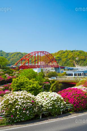 ツツジ咲く音戸大橋の写真素材 [FYI02670663]