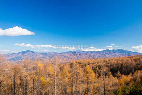 カラマツ林と秩父山地の写真素材 [FYI02670816]