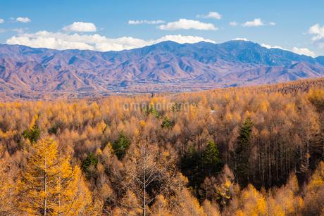 カラマツ林と秩父山地の写真素材 [FYI02670833]