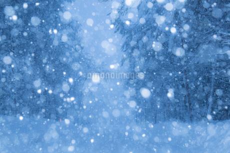 雪降る山道の写真素材 [FYI02670864]