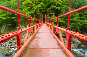 長門峡の紅葉橋と新緑の写真素材 [FYI02670884]