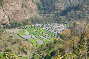 ネパール ゴレパニ・トレッキングコースの写真素材 [FYI02671006]