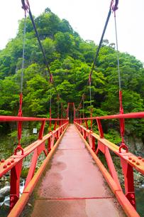 長門峡の紅葉橋と新緑の写真素材 [FYI02671220]