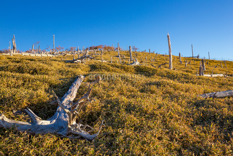 大台ヶ原の枯木群の写真素材 [FYI02671286]