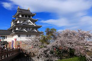 4月 桜の墨俣城-木下藤吉郎秀吉の一夜城ー の写真素材 [FYI02671298]