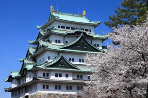 桜の名古屋城天守閣の写真素材 [FYI02671346]