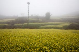 菜の花満開の羅平(中国雲南省)の写真素材 [FYI02671406]