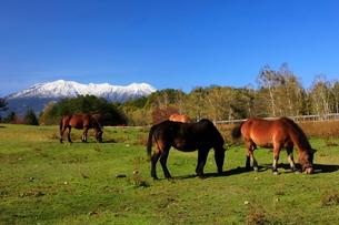 10月 秋の木曽馬の里の写真素材 [FYI02671472]