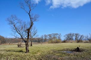 早春の琵琶湖畔と木々の写真素材 [FYI02671480]