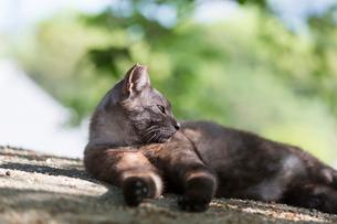 横たわるスモーキーの猫の写真素材 [FYI02671491]