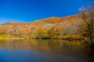 秋の吾妻山の写真素材 [FYI02671548]