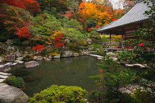 11月秋 紅葉の百済寺 滋賀の秋景色の写真素材 [FYI02671631]
