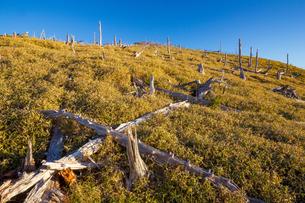 大台ヶ原の枯木群の写真素材 [FYI02671647]