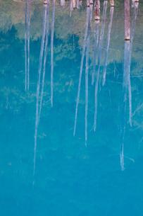 青い池に映る枯木林 北海道美瑛町の写真素材 [FYI02671672]