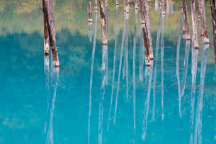 青い池に映る枯木林 北海道美瑛町の写真素材 [FYI02671680]
