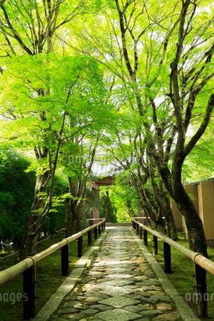 5月 新緑の光悦寺 京都鷹ヶ峯の写真素材 [FYI02671687]