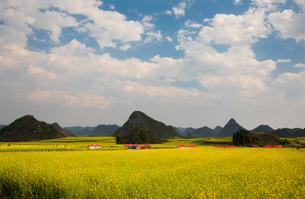 菜の花満開の羅平(中国雲南省)の写真素材 [FYI02671690]
