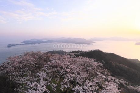 4月春,桜の積善山-しまなみ海道の桜名所-の写真素材 [FYI02671760]