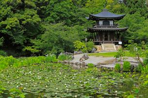 6月 初夏の勧修(かじゅう)寺の写真素材 [FYI02671770]