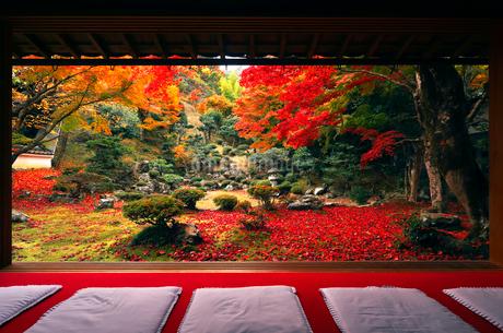 11月 紅葉の徳源院 近江の秋景色の写真素材 [FYI02671793]