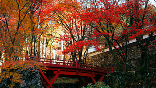 11月 紅葉の横蔵寺-美濃の正倉院-の写真素材 [FYI02671839]