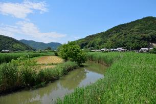 近江八幡の水郷の写真素材 [FYI02671844]