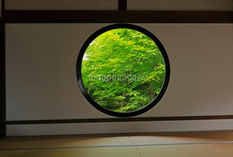 5月 新緑の源光庵 京都鷹ヶ峯の写真素材 [FYI02671854]