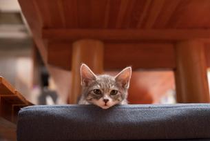 オットマンの上で横になってカメラを見る子猫の写真素材 [FYI02671871]