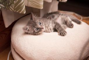 折りたたまれた座椅子の上で眠る子猫の写真素材 [FYI02671894]