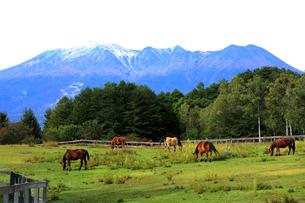 9月 秋の木曽馬の里の写真素材 [FYI02671924]