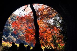 12月 紅葉の愛岐トンネル群 近代化産業遺産の写真素材 [FYI02671942]