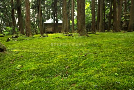 5月 緑の平泉寺白山神社(へいせんじはくさんじんじゃ)の写真素材 [FYI02671943]